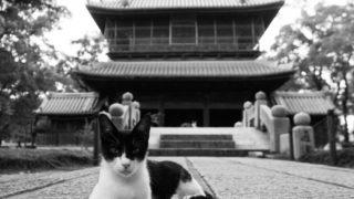 寺にゃんこ。