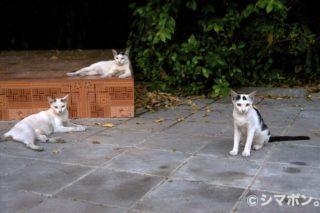 タイの猫 その1