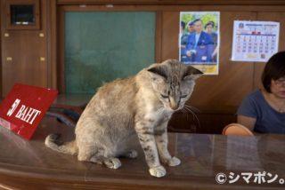 タイの猫 その4