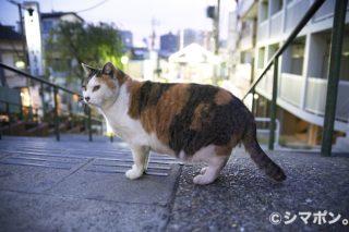 日暮里の猫軍団