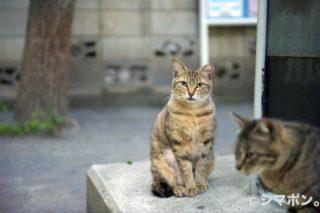 日暮里猫物語〜再会〜