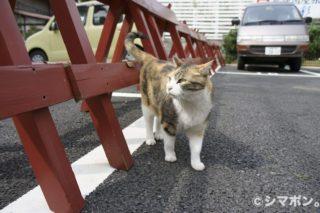 江ノ島にゃんこ その3.5