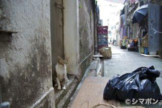 香港路地裏にゃんこ
