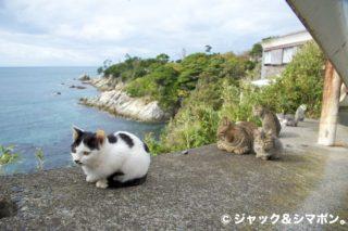 崖の上のネコ。