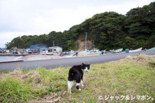 田代島のガイドさん。