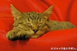 枕が欲しい。