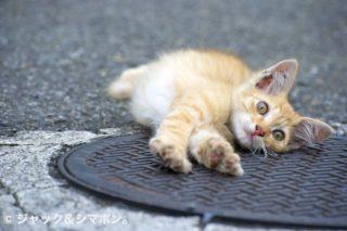 ネコ活動。