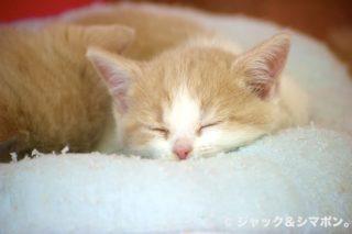 おやすみ〜。
