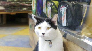 ネコ店員。