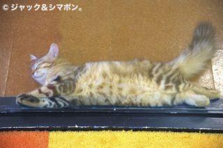 ネコの裏。