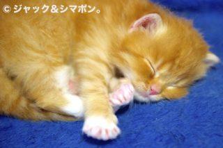 寝る子よ育て。