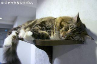 お昼寝スポット。