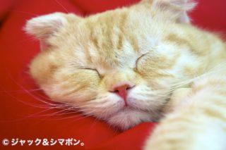 ぶちゃ寝。