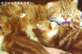 ママの毛づくろい。