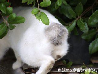 ネコお尻。